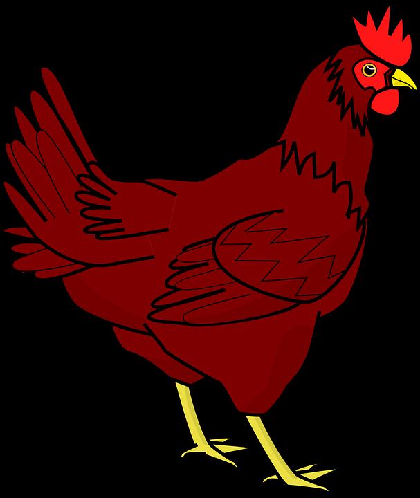 chicken-306299_960_720