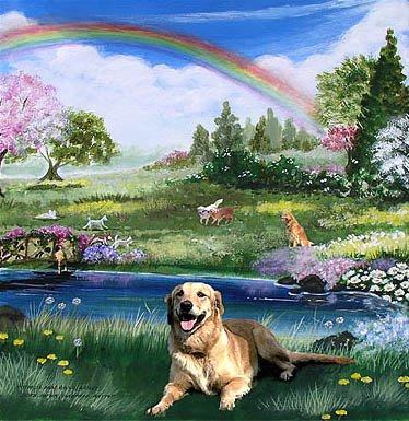 doggie_heaven-767087